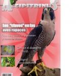 accipitrinus-1-p